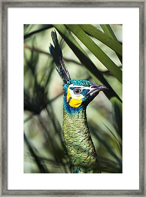 I Am Looking At You Too Framed Print by Nicholas Evans