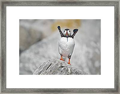 I Give  Up   I Give Up Framed Print by Gordon Ripley