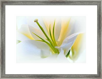 I Must Be Dreaming.... Framed Print