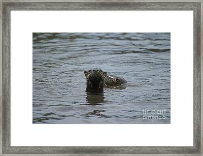 I See Bald Humans Framed Print by Jack Norton
