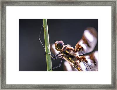 I See You Framed Print by Scotts Scapes