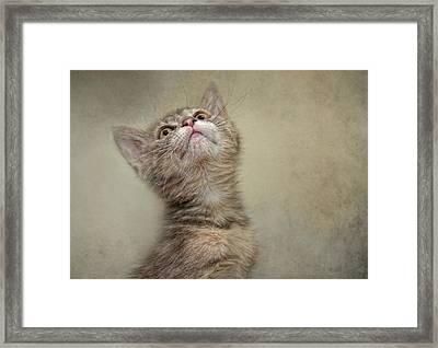 I Smell Tuna Framed Print