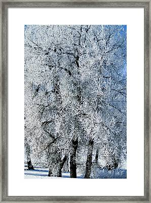 Iced Framed Print by Colleen Coccia
