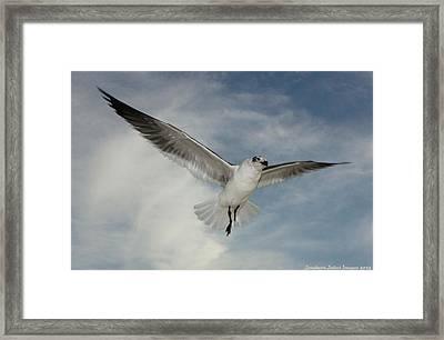 In Flight 2 Framed Print by Sharon Ventimiglia
