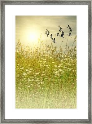 In God's Country Framed Print by Tom York Images