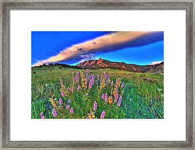 In The Moment Framed Print by Scott Mahon
