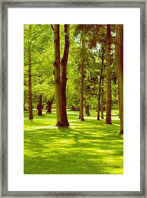In The Park Framed Print by Design Windmill