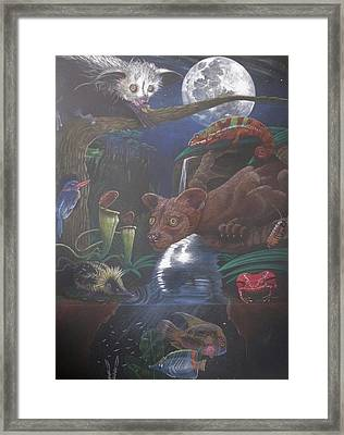 Indigenous Creatures Of Madagascar Framed Print by Beth Dennis
