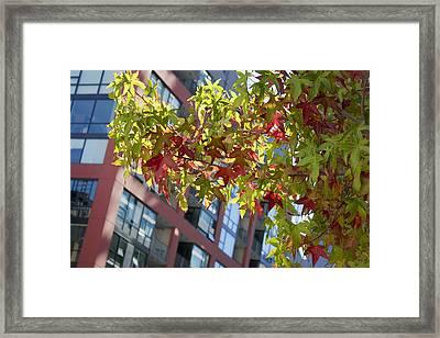 Inner City Autumn Framed Print