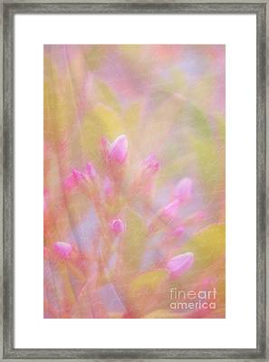 Innocence Framed Print by Judi Bagwell