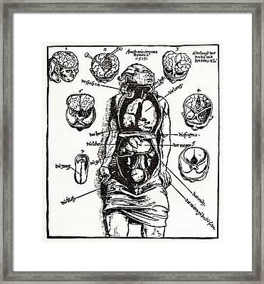Internal Anatomy, 16th Century Diagram Framed Print