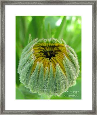 Inverted Framed Print by Tina Marie