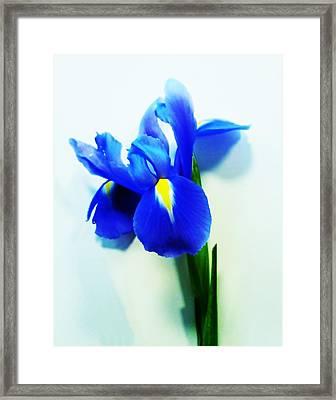 Iris Framed Print by Sharon Lisa Clarke