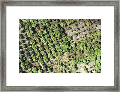 Irrigation Canals Provide Framed Print by Michael Fay