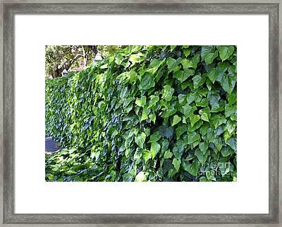 Ivy Wall Framed Print by Carol Groenen