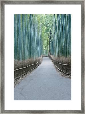 Japan Kyoto Arashiyama Sagano Bamboo Framed Print by Rob Tilley