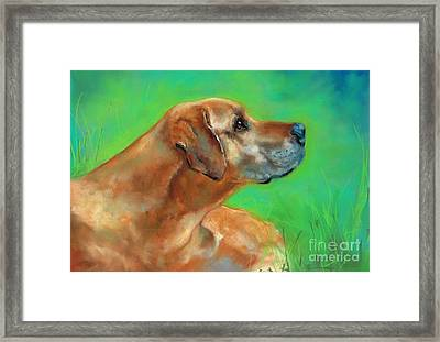 Jasper Framed Print by Frances Marino