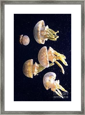 Jellyfish 3 Framed Print