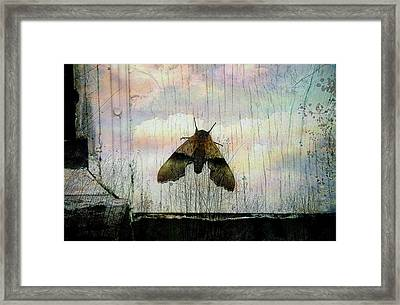 Just Arrived Framed Print by Shirley Sirois