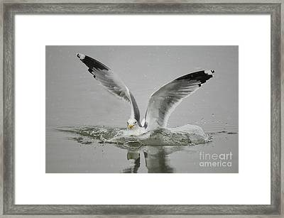 Just Missed Framed Print by Dennis Hammer