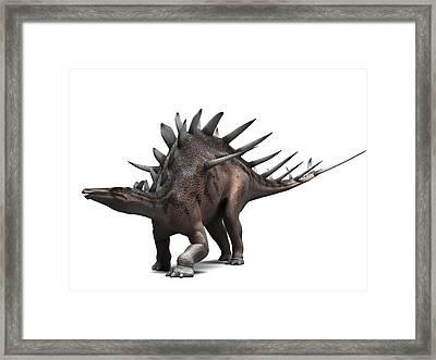 Kentrosaurus Dinosaur, Artwork Framed Print by Sciepro
