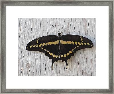 Kewl Moth Framed Print