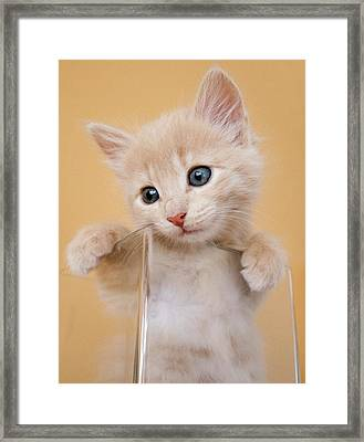 Kitten In Glass Vase Framed Print by Sanna Pudas