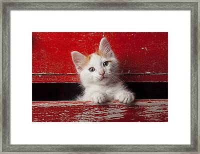 Kitten In Red Drawer Framed Print by Garry Gay