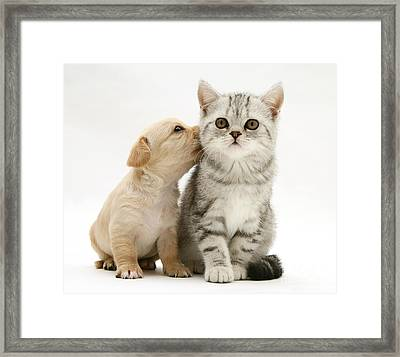 Kitten With Pup Framed Print by Jane Burton