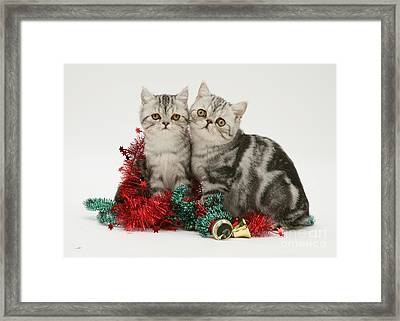 Kitten With Tinsel Framed Print
