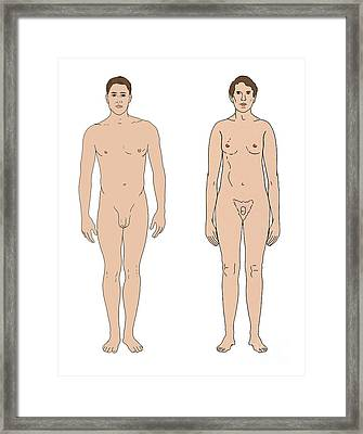 Klinefelters Syndrome & Healthy Male Framed Print by Science Source