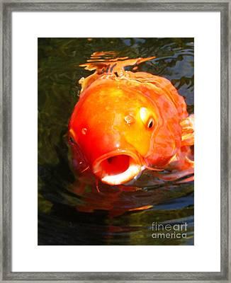 Koi Fish Framed Print by Angela Murray