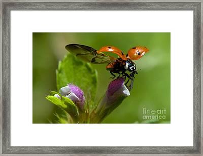 Lady Bird Take Off Framed Print