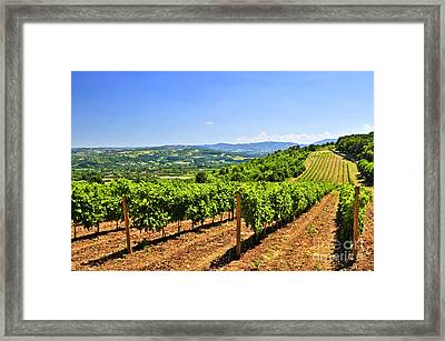 Landscape With Vineyard Framed Print by Elena Elisseeva