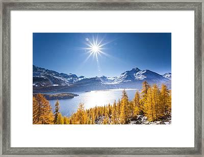 Larch Trees, Lake Sils And Piz De La Margna, Engadin, Canton Of Graubunden, Switzerland Framed Print by F. Lukasseck