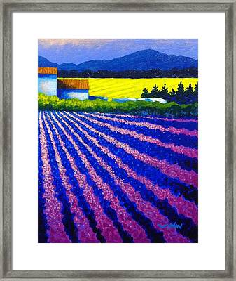 Lavender Field Provence Framed Print by John  Nolan