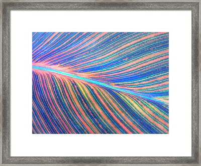Leaf Colors Filtered Framed Print