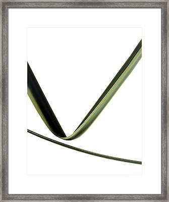 Leaves Framed Print by Gavin Kingcome