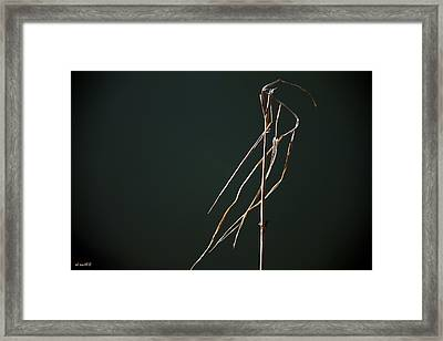 Left Behind Framed Print by Ed Smith