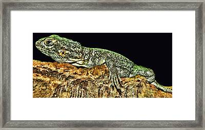 Let Me Strike A Pose Framed Print by Lourry Legarde