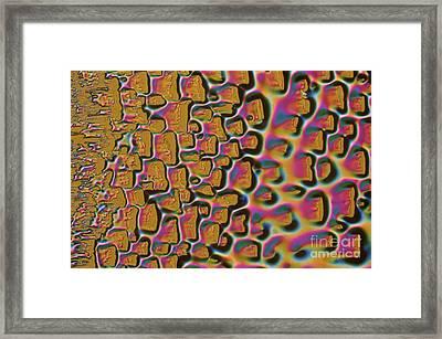 Lexan Framed Print by Michael W. Davidson