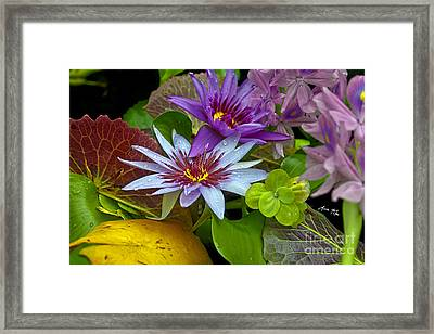 Lilies No. 32 Framed Print