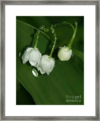 Lily Of The Valley Framed Print by Odon Czintos