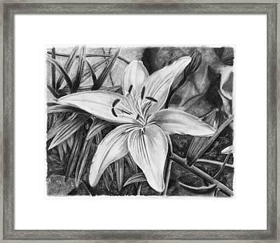 Lily Framed Print by Susan Schmitz
