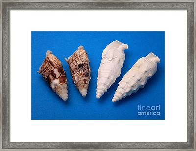 Lime Made From Seashells Framed Print by Ted Kinsman