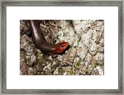 Lizard Framed Print by Jeanne Andrews