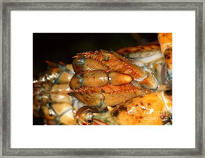 Lobster Mouth Framed Print by Ted Kinsman
