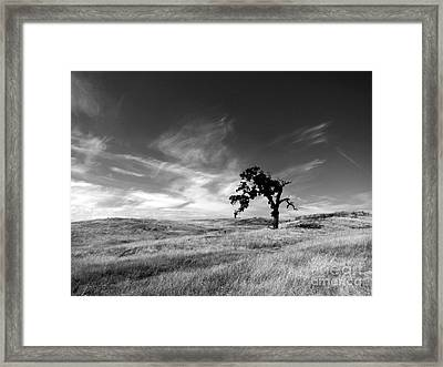 Framed Print featuring the photograph Loneliness by Irina Hays