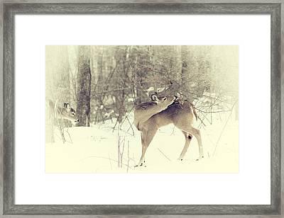 Looking Back Framed Print by Karol Livote