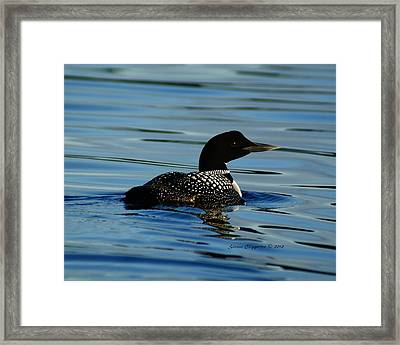 Framed Print featuring the photograph Loon 2 by Steven Clipperton